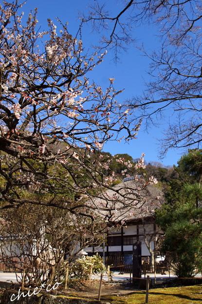 北鎌倉-366