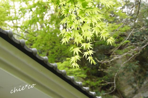 鎌倉-712
