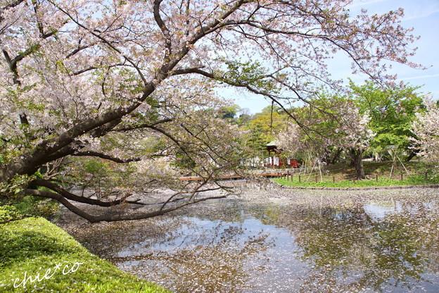 鎌倉-779