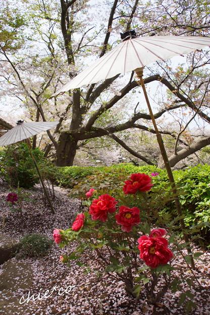 鎌倉-795