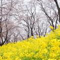 写真: 根岸森林公園-085