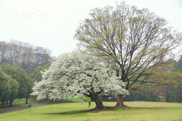 根岸森林公園-090