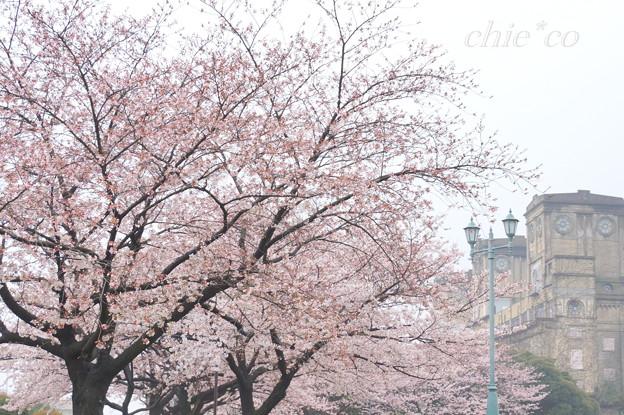 写真: 根岸森林公園-099