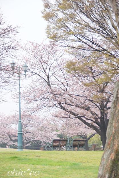 根岸森林公園-103