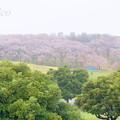 写真: 根岸森林公園-108
