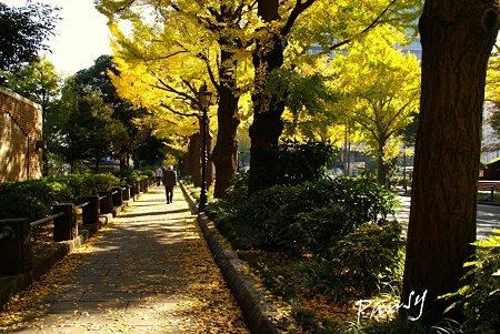 晩秋の横浜・・2