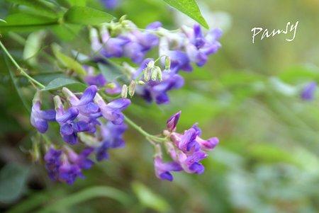 purple...