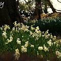 Photos: 花盛り~♪