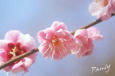 夢いろピンク・・5