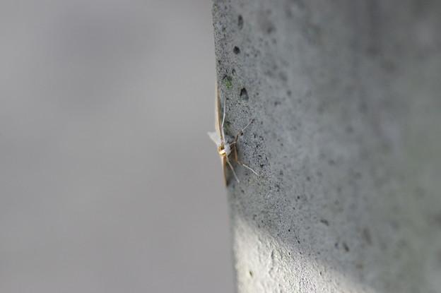 久々の昆虫