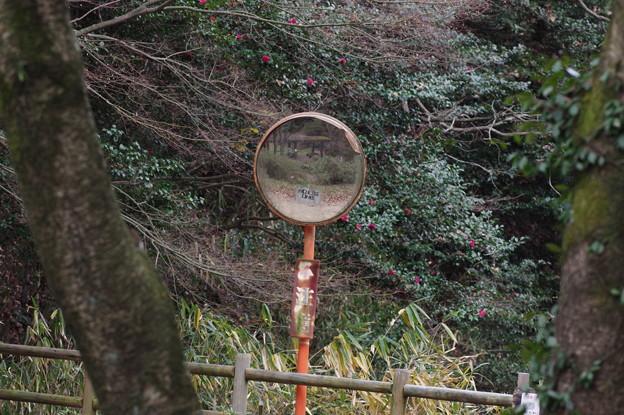 カーブミラーで見る冬の藤棚