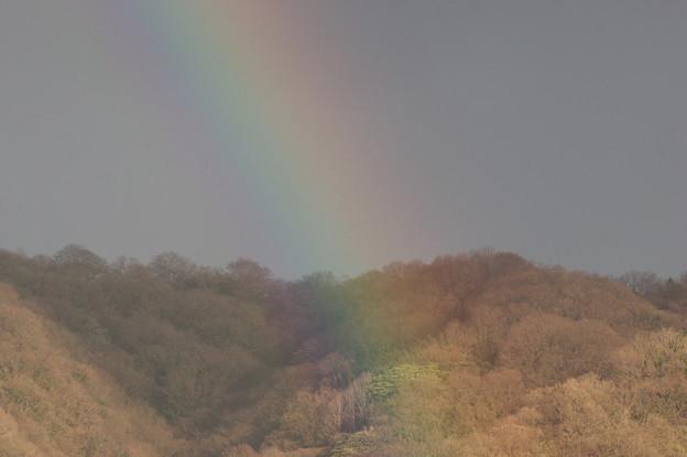 山の中腹まで掛かる虹