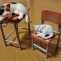 猫たちの放課後