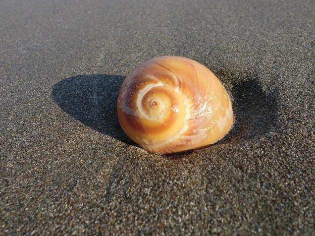浜辺の渦巻き