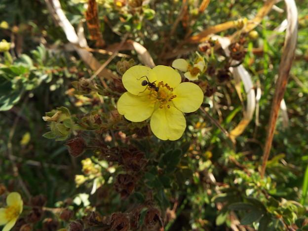 旅で気になった花 花と蟻