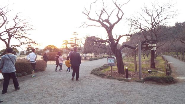 梅の木再生DSCF7712