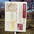 Photos: 道知辺 神代DSCF1266