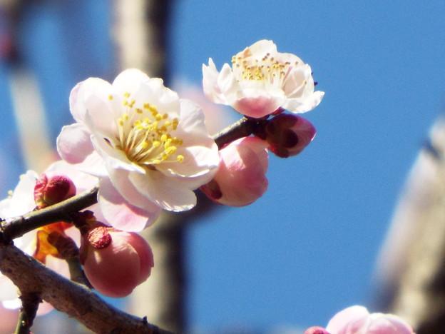 Photos: 内裏 神代DSCF1301