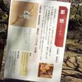 酈懸 神代DSCF1179