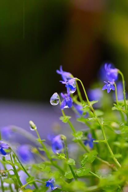 Photos: 雨滴1