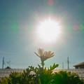Photos: 眩しい日差し