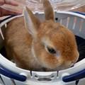 Photos: 動物病院へ