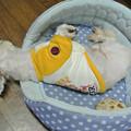 Photos: 気持ちよさそうに寝てる所を