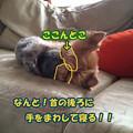 Photos: o0323043113110202900