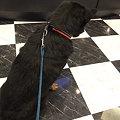 Photos: 肝っ玉のでかい犬「大輔」