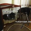 Photos: 無犬のベッド