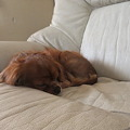 Photos: 安心してソファーで寝る悠大