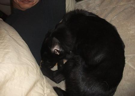 寄り添って寝ているセナ