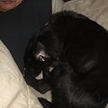 Photos: 寄り添って寝ているセナ
