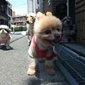 Photos: 笑顔のポンちゃん♪