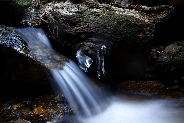 朽ち木と渓流と氷柱