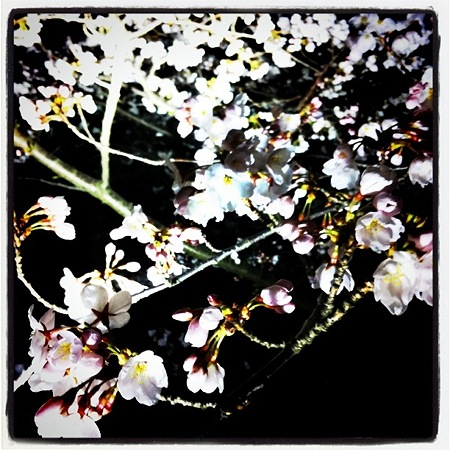 花見の場所取り 004