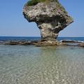 写真: 逐浪珊瑚