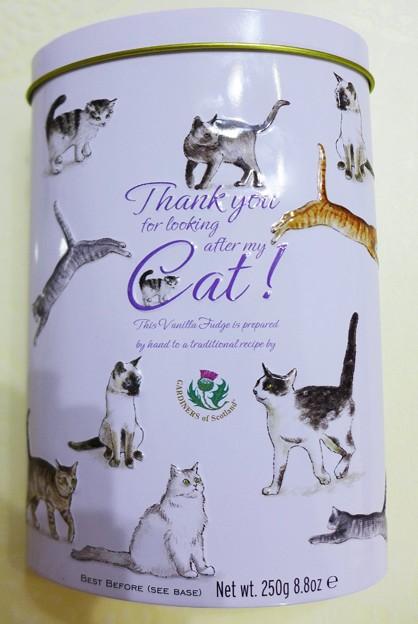 フィールドエスト【バニラファッジ】Thank you Cat!