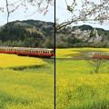 Photos: 黄色い海