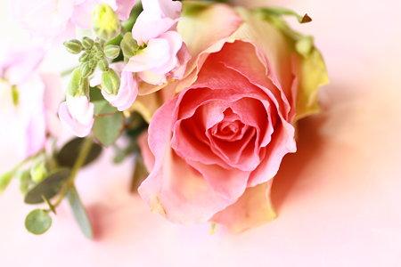 淡桃色の薔薇