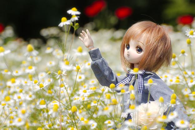 高い花だねぇ~
