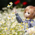 写真: 高い花だねぇ~