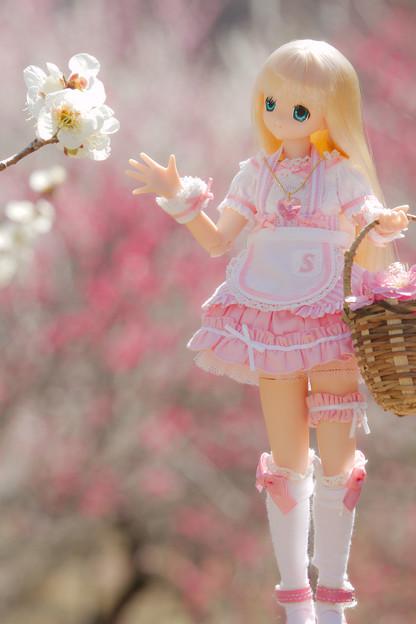 お花摘み-1