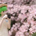 Photos: しだれ桜-14