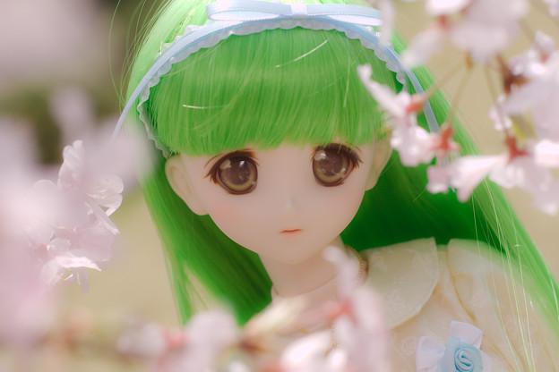 しだれ桜-15