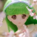 Photos: しだれ桜-15