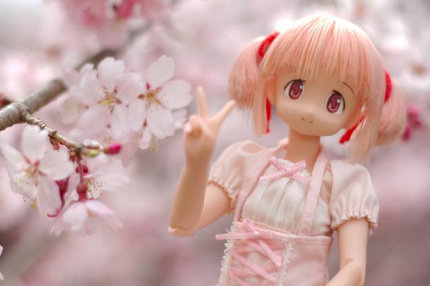 しだれ桜-16