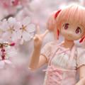 Photos: しだれ桜-16