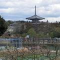 写真: 0207斑鳩の里9法輪寺