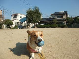 2009_1106朝の散歩0004